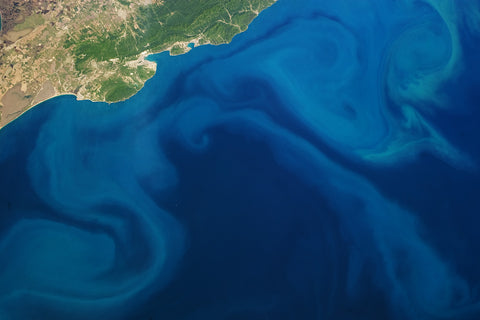 plankton phytoplankton from space
