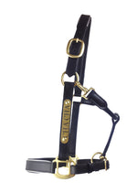 Leather Halter - Brass Fittings with Engraved Horse Nameplate