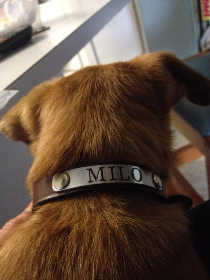 Custom Engraved Leather Dog Collar