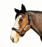 Draft Horse Leather Halter - Silver Fittings with Engraved Nameplate