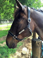 Leather Halter - Stainless Buckles with Engraved Horse Nameplate