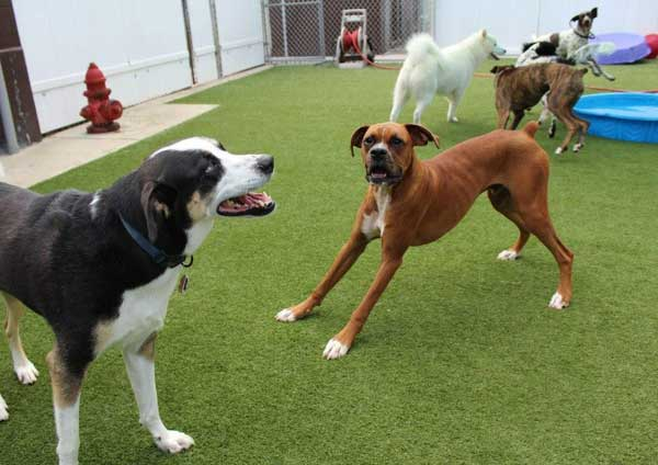 Doggy Daycare Near Me | What to Look for and How to Decide