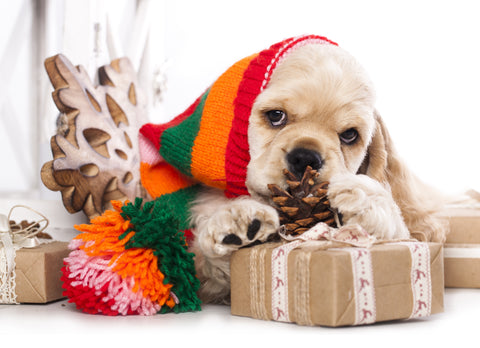 The Ultimate Holiday Gift Ideas for Pet Lovers