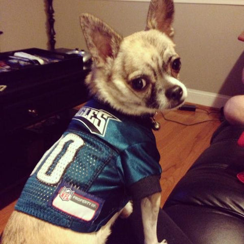 7ccbd38e402 The Ultimate Guide  How to Dress Your Pet for Game-day This Season ...