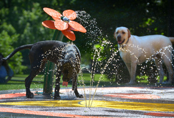 Amazing Dog Water Park