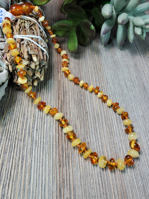 12 inch Baltic Amber