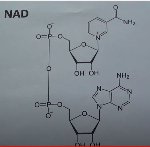 NAD runner vitamin and runner supplement