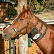 Equi-Ice Advanced Equine Cold Therapy Neck Pack