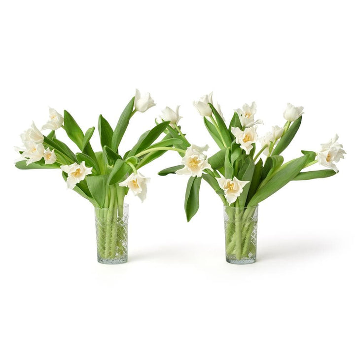 Social Studies Florals Fresh White Lilyflowered Tulip