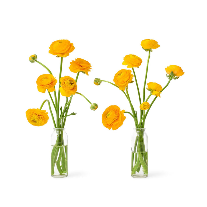 Social Studies Florals Fresh Yellow Ranunculus