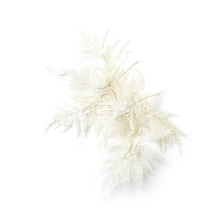 White Preserved Fern