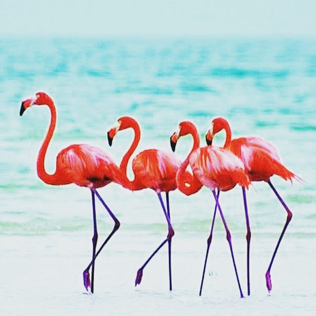 4 flamants roses à la plage