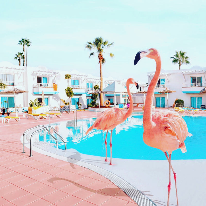 Flamant rose à la piscine
