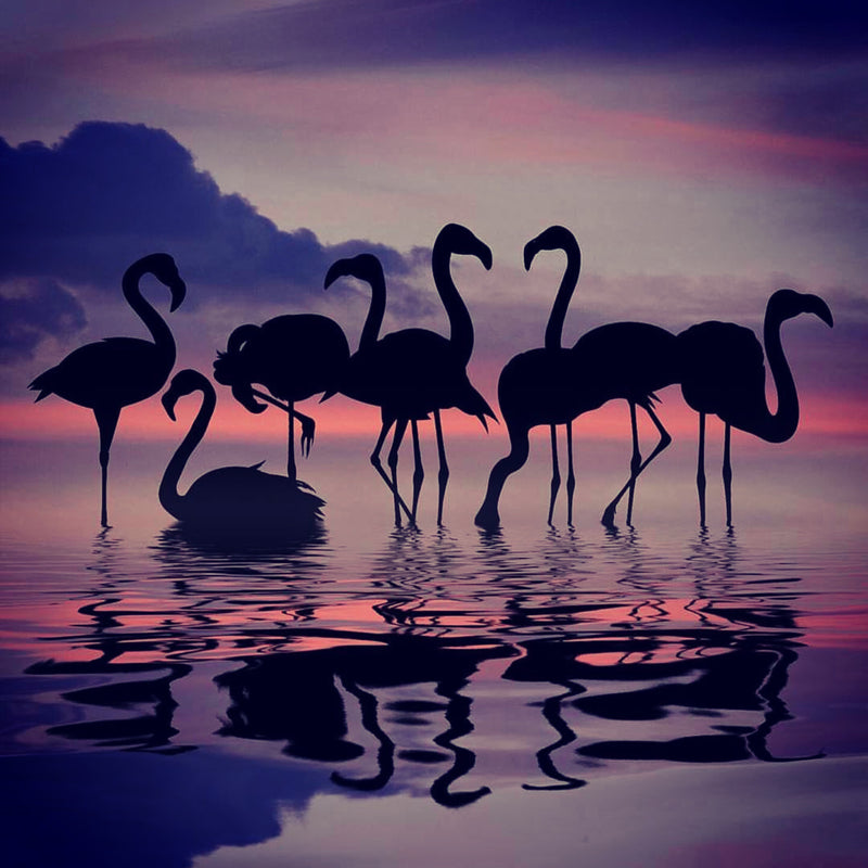 Flamants roses à la nuit tombante