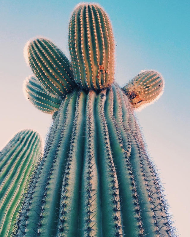 Photo d'un énorme cactus