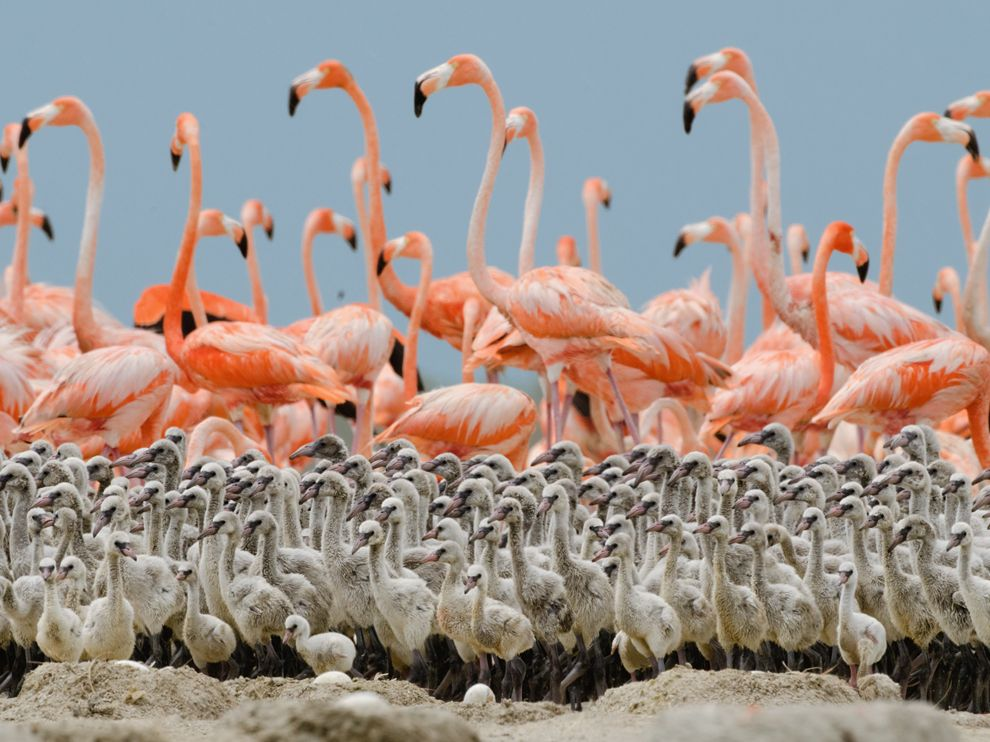 Crèche de flamants roses