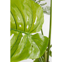 Load image into Gallery viewer, Deco Plant Monstera 175cm