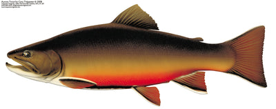 The Temagami Aurora Trout: Ontario's Hidden Gem