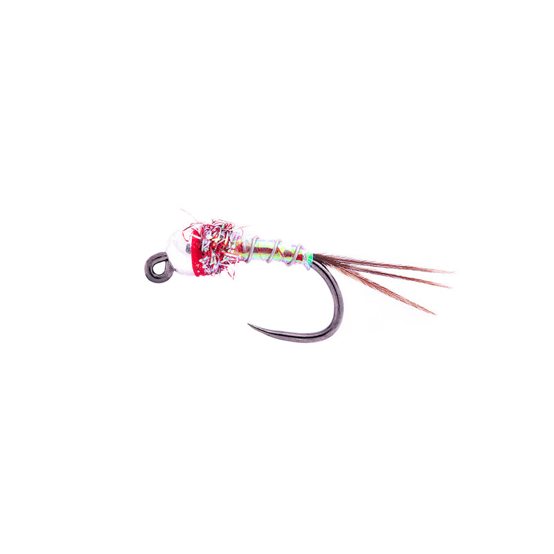 Lance Egan Rainbow Warrior Tungsten