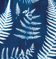 Cyanotype fern print detail made in Cornwall by Paper Birch