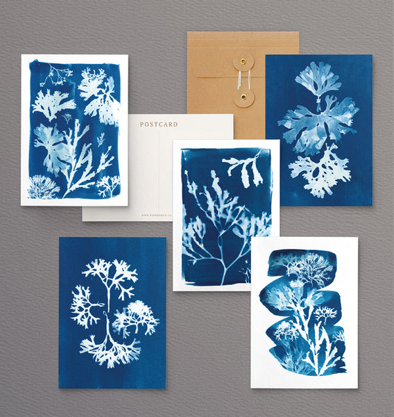 british seaweed cyanotype postcard set, gift set, cornwall art, sea inspired stationery