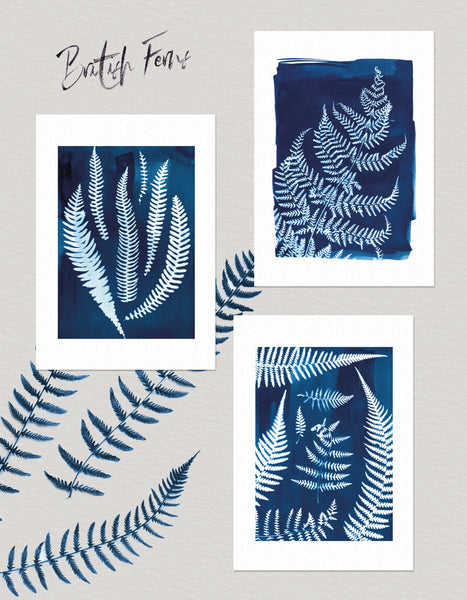 Set of 3 coastal wall art prints, ferns collected in Cornwall