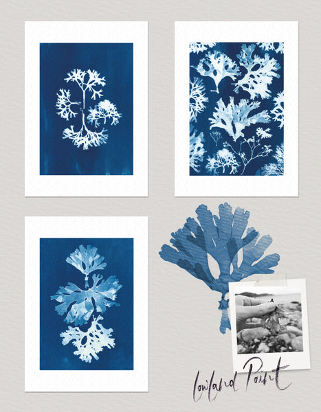Set of 3 coastal wall art prints, Lowland Point, Cornwall Cyanotype Seaweed Print