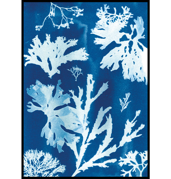 Lowland Point, Cornwall Cyanotype Seaweed wall art Print