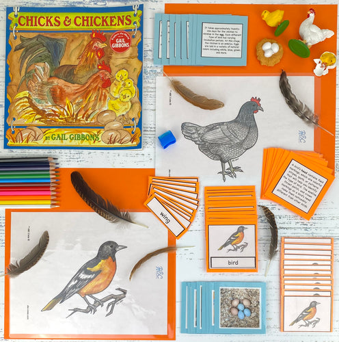 Birds and Aves Kit