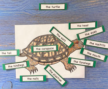 Turtles and Reptiles Kit