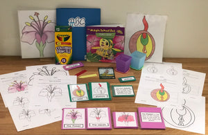 Flower and Seeds Botany Kit