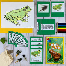 Frogs and Amphibians Kit