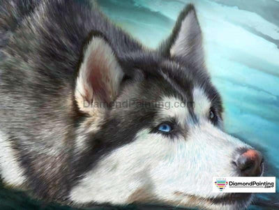 Dog Glare Painting With Diamonds Kit