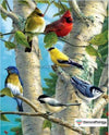 Wild Animal Life Birds Cardinal / 25X30Cm