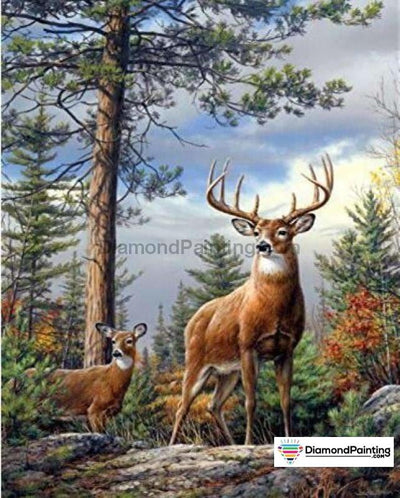 Wild Animal Life Deer Hunt / 25X30Cm
