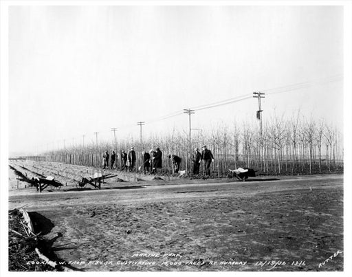 10,000 tree nursery at 34th Street Old Vintage Photos and Images