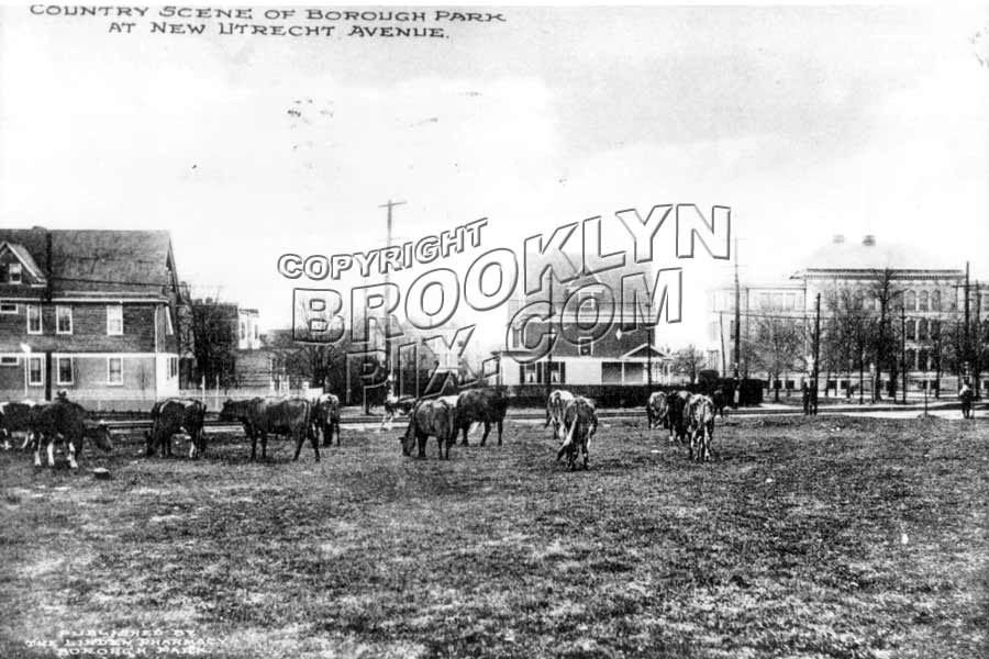10th Avenue at 43rd Street, looking toward New Utrecht Avenue, also showing PS 131, 1912 Old Vintage Photos and Images