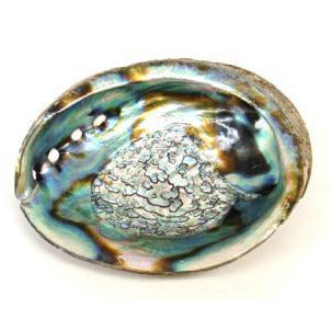 "Abalone Shell 5-6""L - Mystic Pines Candle Co."