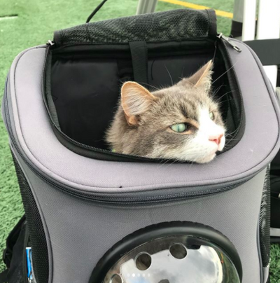 YourCatBackpack | The Fat Cat Backpack