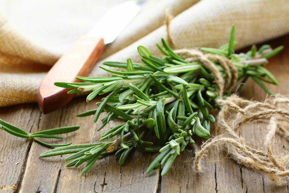 Why We Love Rosemary: Health, Cooking & Landscaping Benefits
