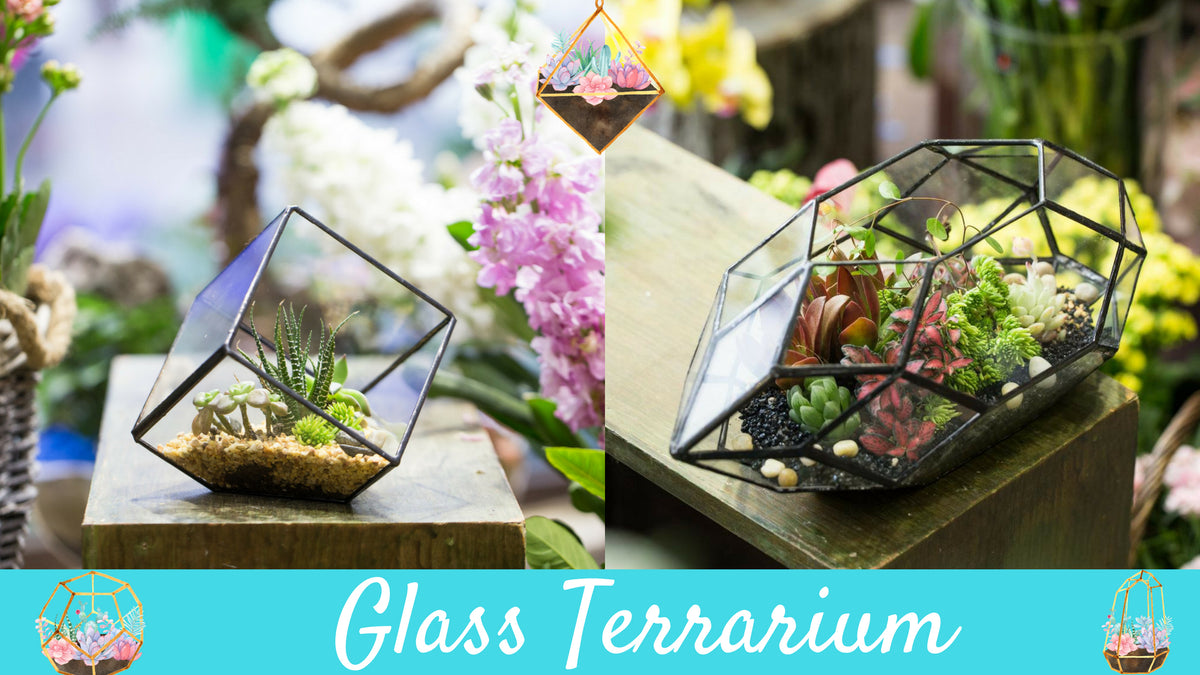 Shop Our Store Terrarium Zone Miniature Terrariums Plants Gifts
