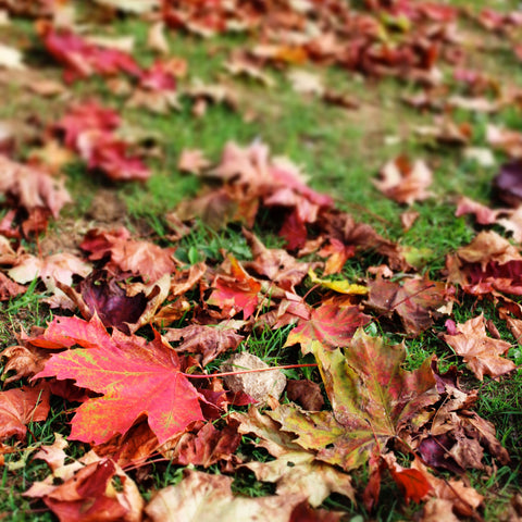 Autumn Leaves *FALL SEASONAL*