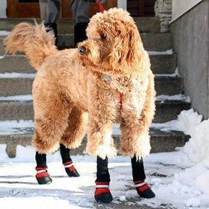 Double Strap All Season Doggie Booties (3 Colors)