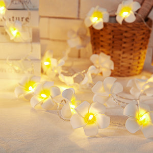 Plumeria Flower LED String Lights