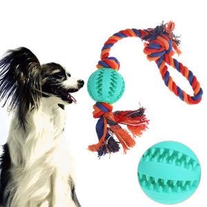 Dogs Chew Play Ball