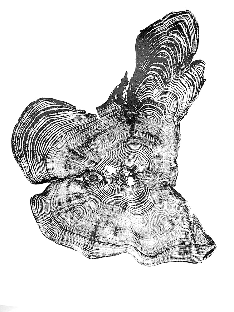 White Cedar Tree Ring Print