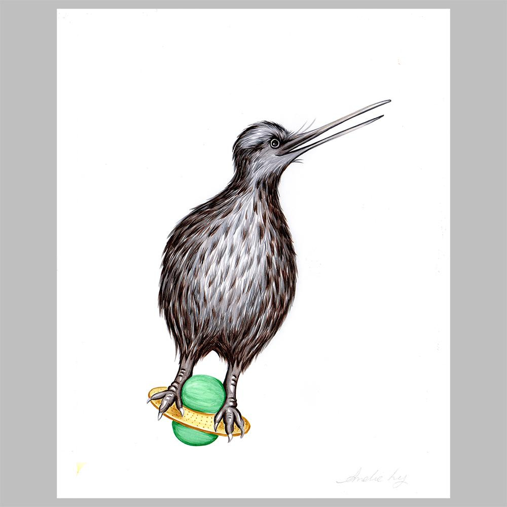 Kiwi bird illustration, amelie legault, original artwork. pogo ball, new zealand