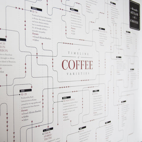 Coffee variety family tree timeline - 2