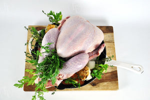 Turkey <br> Whole Bird