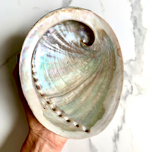 Natural Abalone Shell - Large